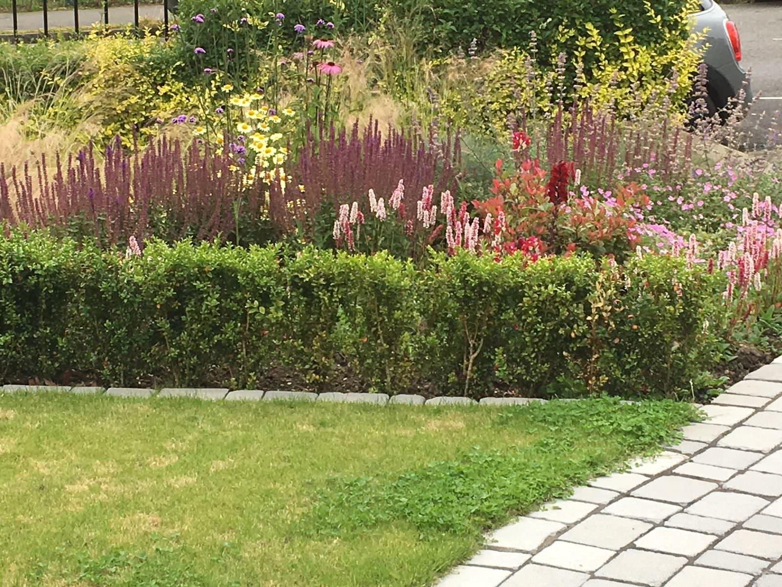 Flower border, Edinburgh garden