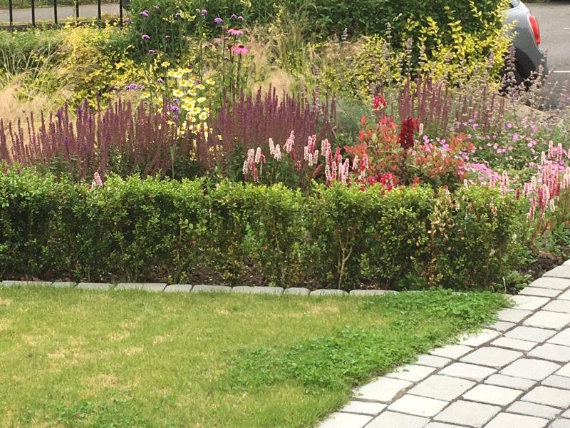 Garden design planting example from Edinburgh client
